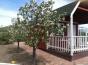 Bing cherry blossoms at Vineyard Ranch