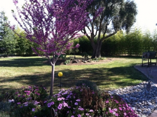 Spring flowers at Vineyard Ranch