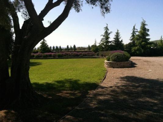 Lawn and lavender wall at Vineyard Ranch