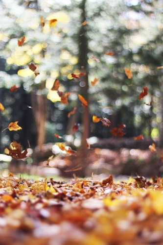 Leaves falling to the ground