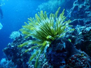 green plant in the ocean