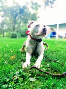 Taking a Dog-Friendly RV Trip: What to Keep in Mind