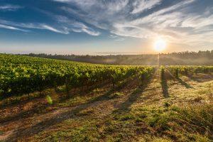 September is California Wine Month in San Luis Obispo