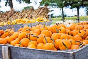 Pumpkin patch in San Luis Obispo
