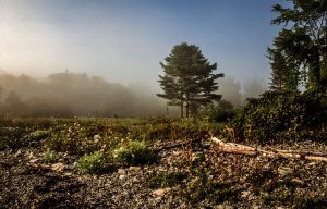 Foest and meadow with morning fog, Lincolnville Beach, Maine, USA