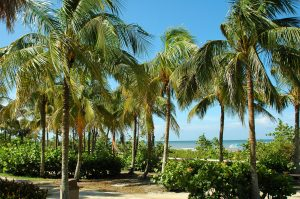 tropical beach with palm trees in Key West